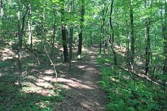 Blue Extension Trail
