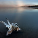 Yellowstone - Lewis Lake by Snorri Gunnarsson