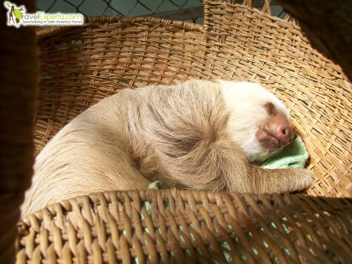 sloth-at-rescue-center