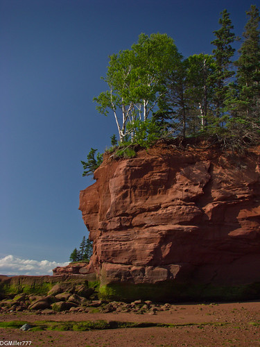 park trees cliff canada rock raw novascotia head ns birch bayoffundy burncoat burntcoat dng chdk