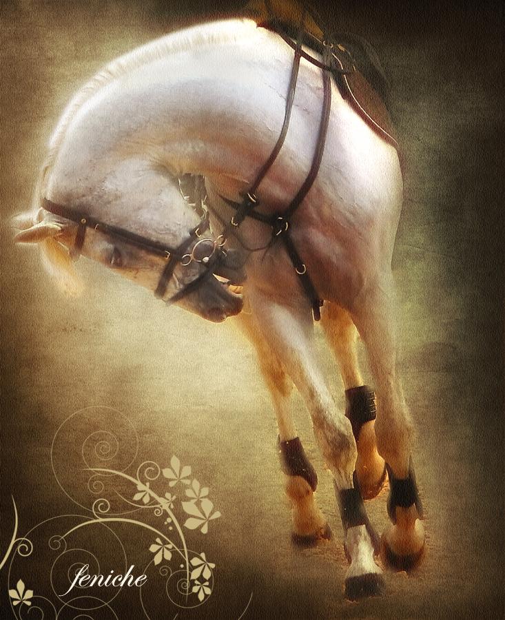 los mejores caballos del mundo 4