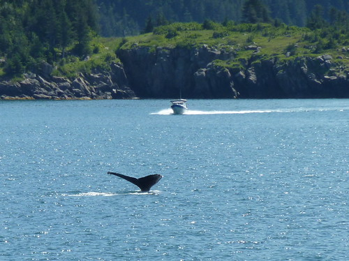 USA, Alaska, Boot Resurrection Bay - humpback whale