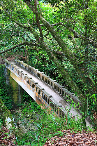 GN73滿月圓國家森林遊樂區-楓香拱橋