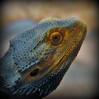 Thanks to World of Reptiles.Stoke on Trent for allowing me to photograph in the shop.....