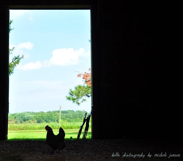 On the Farm