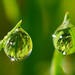 Tiny dew drops on grass(Explored) by jaros 2(Ron)