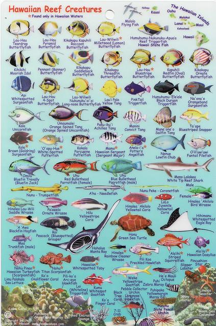 Hawaiian fish names aloha joe in hawaii a visual guide for Hawaiian fish names and pictures