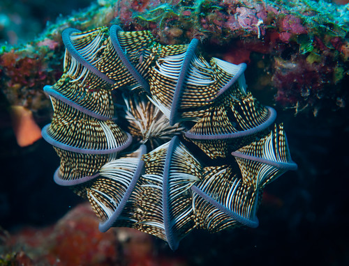 Feather star - in protection mode!