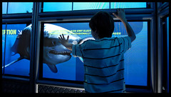 Interactive Dive Cage - our virtual Great White Shark