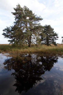 Reflex on water @ Hoge Veluwe National Park
