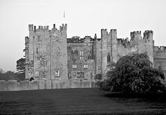 Raby Castle & Deer