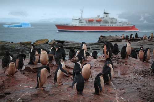 M/S Expedition and the Adélie Penguin crèche of Shingle Cove