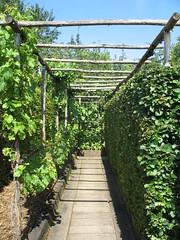 Jardins du Prieuré d'Orsan - Maisonnais {juli 2011}
