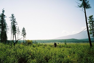 Siberian taiga