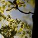 May 10, 2011: Spring has sprung