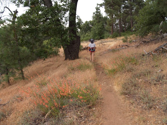 Oaks and wildflowers on the Pacific Crest Trail
