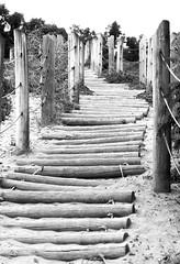 Photograph: Beach Steps