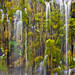 Part of a Whole, Mossbrae Falls, Dunsmuir, Ca