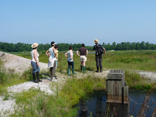 Seed Collecting in the Pine Barrens