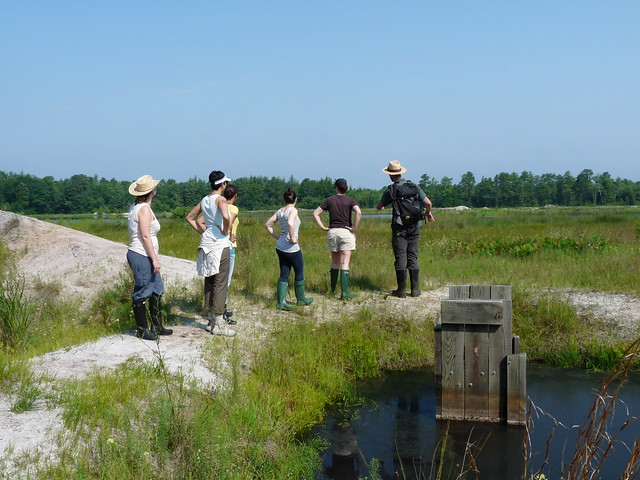 BBG staff size up a bog before continuing their wild-seed hunt. Photo by Lauren Deutsch.