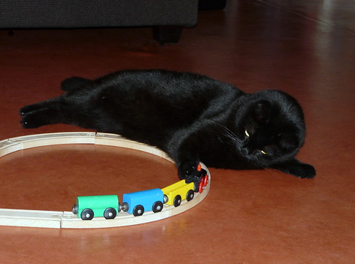 Sirius playing with a train