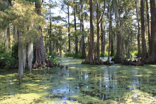 campus lafayette swamp cajun wharton ul ull vl cajunswamp vlwharton