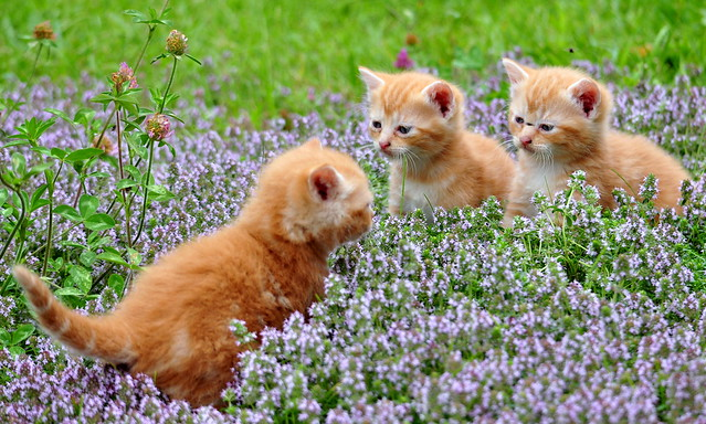 Three Lil Kittens