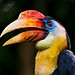 Colorful hornbill