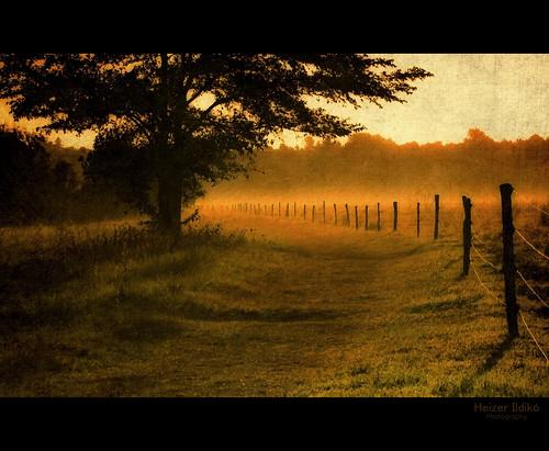 hungary természet fa táj köd pára tájkép hajnal nyár napfelkelte textúra canonsx10 mygearandme ringexcellence
