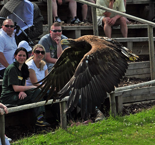 sea eagle and the crowd