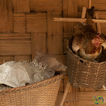 Chicken in Basket - Bandarban, Bangladesh