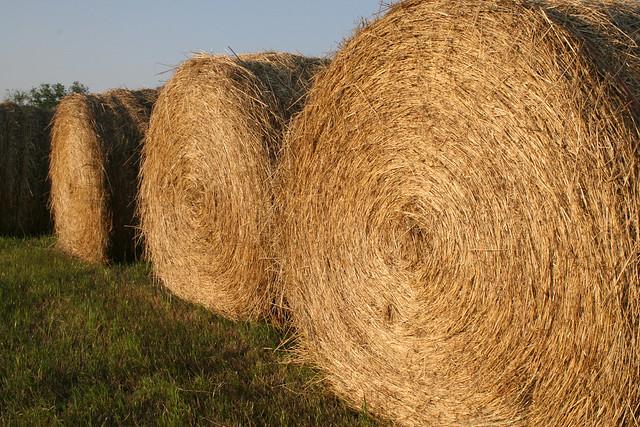 Les éléments nutritifs sont influencés par plusieurs facteurs, principalement par le degré de maturité de la récolte et des conditions météorologiques.