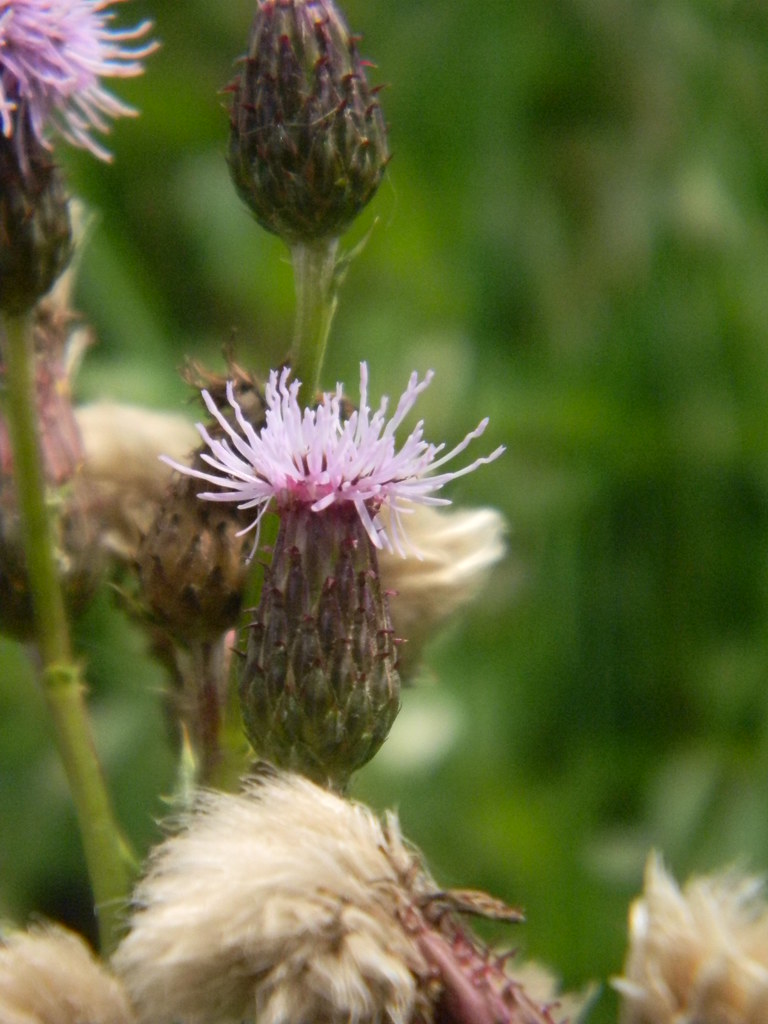 Thistle Amberley to Pulborough