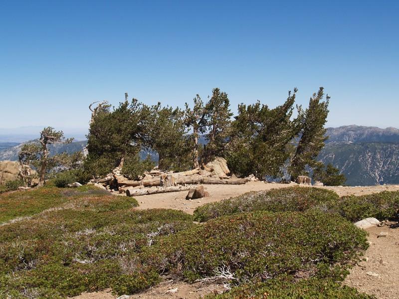 Limber Pine Bench Camp