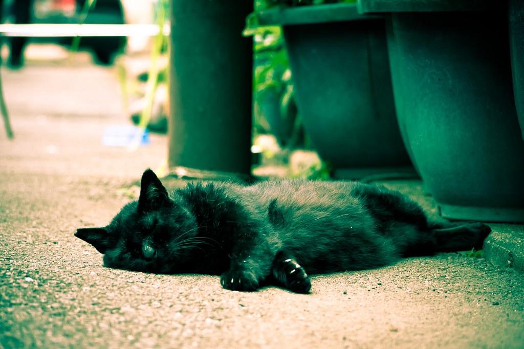昼寝する黒猫 2011/08/01 P1060014