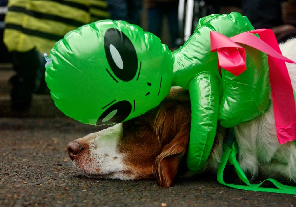 alien dog