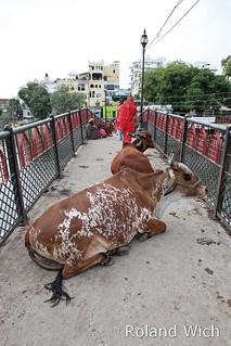 Udaipur - Occupied Bridge...