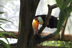 animal(1.0), hornbill(1.0), branch(1.0), toucan(1.0), fauna(1.0), coraciiformes(1.0), beak(1.0), bird(1.0), wildlife(1.0),