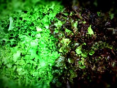 algae(0.0), flower(0.0), soil(0.0), food(0.0), vegetable(1.0), leaf(1.0), plant(1.0), nature(1.0), leaf vegetable(1.0), macro photography(1.0), green(1.0), produce(1.0), moss(1.0),