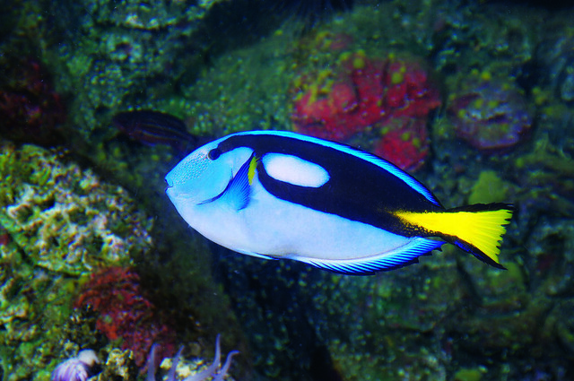 Flickr: Oceanarium, Bournemouths Photostream