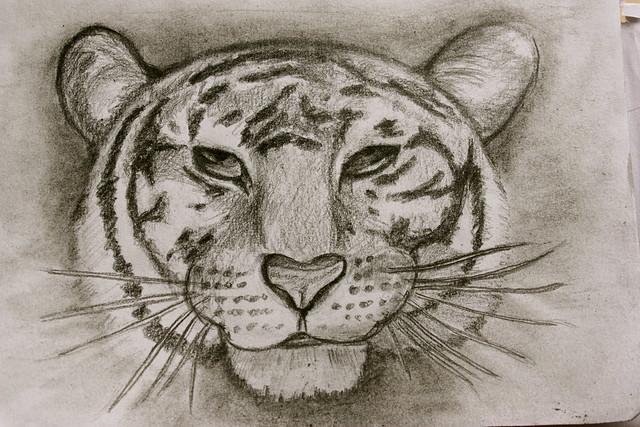 Sketched Tiger