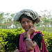 Tea Picker - Srimongal, Bangladesh