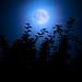 Werewolf time by Martin Hedlund