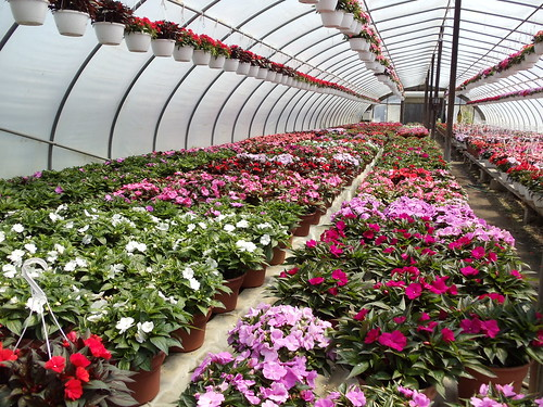 BLESSING GREENHOUSES