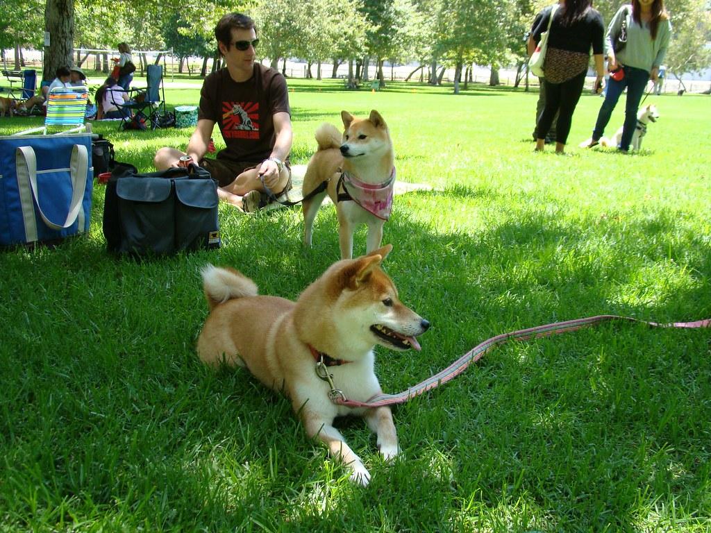 descansar con perros