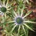 weeds. 11. by lindsey kraay