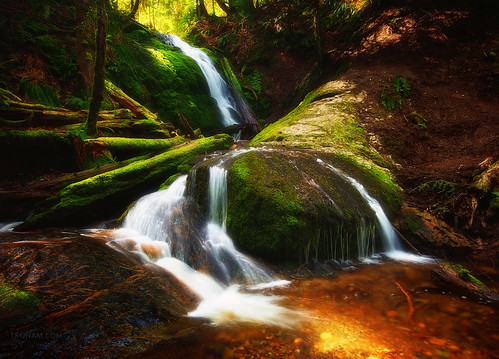 county longexposure trees red usa sunlight green nature water rock creek forest landscape waterfall washington moss nikon rocks king hiking logs sigma blurred falls foliage dirt shade pacificnorthwest 1020mm washingtonstate 1020 pnw damp issaquah cougarmountain mytop coalcreek 2011 d90 sigma1020mmf456exdc nikond90 tronam gabrieltompkins