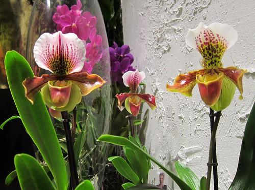 Orkideat ikkunassa by Anna Amnell