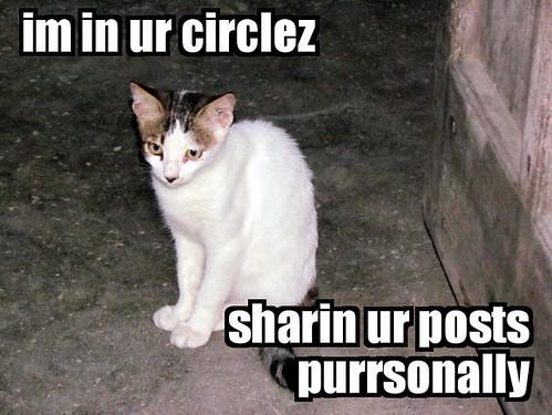 Google+ Circles Lolcat