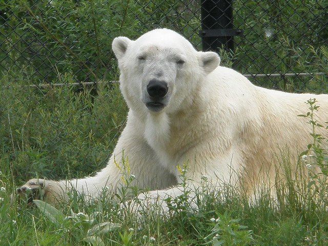 One of the Polar Bears